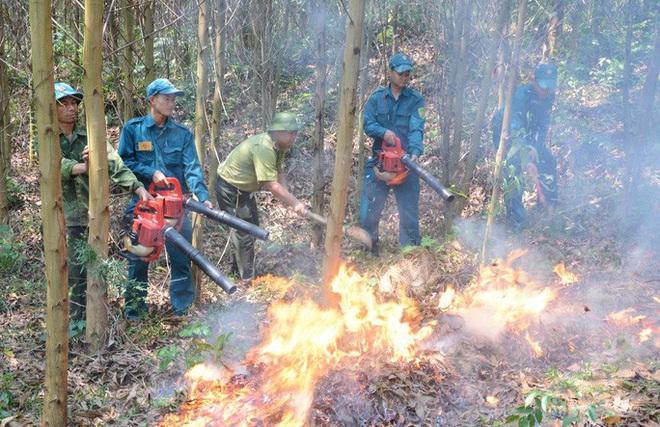 Miền Trung - Tây Nguyên: Nguy cơ cháy rừng rất cao - ảnh 1