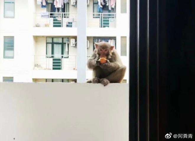 Khỉ bất ngờ xuất hiện trong ký túc xá sau kì nghỉ dịch, nhà trường cảnh báo: Tránh để khỉ tấn công, các em đánh không lại đâu - ảnh 1