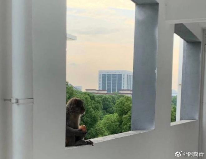 Khỉ bất ngờ xuất hiện trong ký túc xá sau kì nghỉ dịch, nhà trường cảnh báo: Tránh để khỉ tấn công, các em đánh không lại đâu - ảnh 3