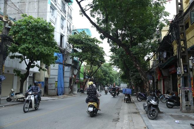 Ảnh: Cận cảnh hàng loạt cây xanh mục gốc, ngả hướng ra giữa đường ở Hà Nội - ảnh 2