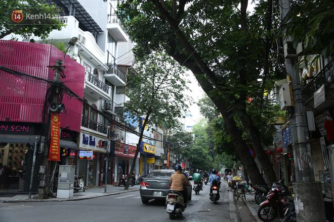 Ảnh: Cận cảnh hàng loạt cây xanh mục gốc, ngả hướng ra giữa đường ở Hà Nội - ảnh 8
