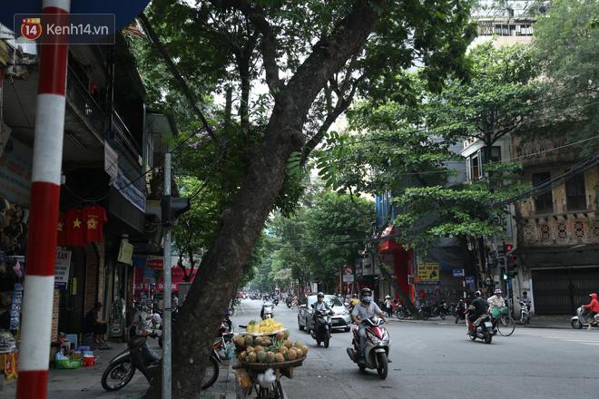 Ảnh: Cận cảnh hàng loạt cây xanh mục gốc, ngả hướng ra giữa đường ở Hà Nội - ảnh 7