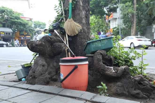 Ảnh: Cận cảnh hàng loạt cây xanh mục gốc, ngả hướng ra giữa đường ở Hà Nội - ảnh 14
