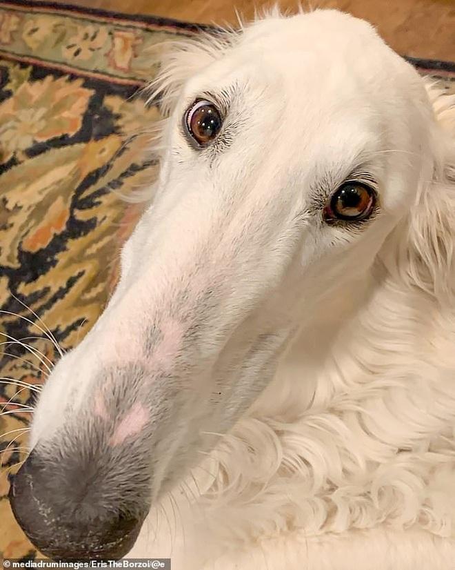 Sở hữu cái mõm dài như mỏ vịt, chú chó bỗng nổi rần rần thành hiện tượng rồi hốt về hơn 200 nghìn fan trên MXH - ảnh 4