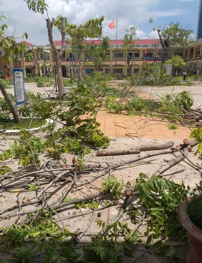 Nhiều trường quây hàng rào, đốn cây xanh trong sân sau hàng loạt vụ phượng vĩ bật gốc - ảnh 3