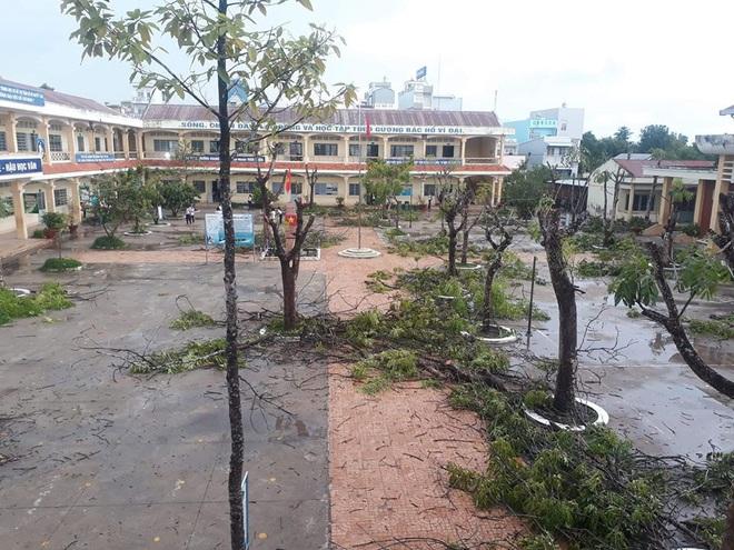 Nhiều trường quây hàng rào, đốn cây xanh trong sân sau hàng loạt vụ phượng vĩ bật gốc - ảnh 4