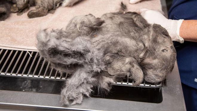 Bị bao phủ bởi 1kg lông rậm rạp, mèo hoang khiến nhiều người mới gặp phải bối rối vì không biết là con gì - ảnh 4