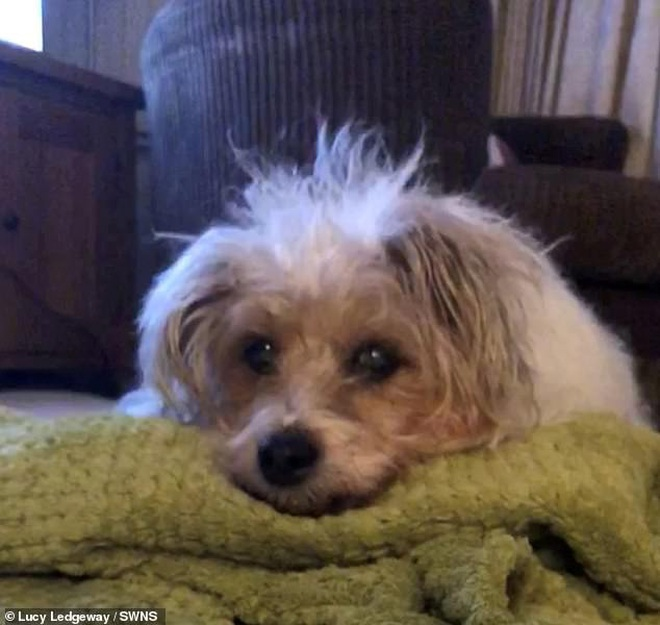 Cô gái bật khóc nức nở khi nhìn thấy hình ảnh chú chó cưng đã qua đời xuất hiện giữa trời mây - Ảnh 1.