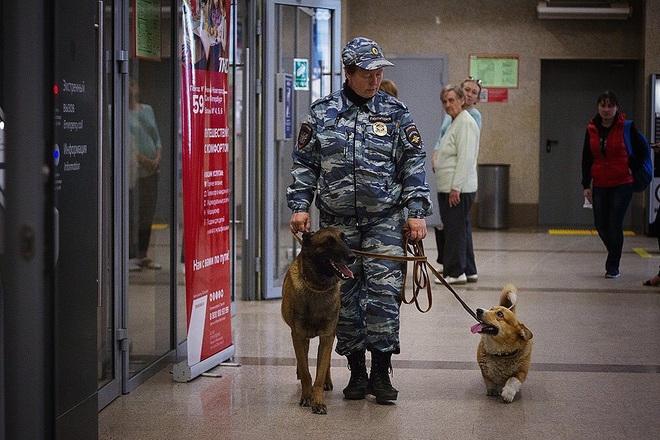 Sau 7 năm cống hiến thanh xuân cho ngành cảnh sát, cuối cùng soái cẩu nghiệp vụ Corgi duy nhất tại Nga đã nghỉ hưu khiến bao người tiếc nuối - ảnh 6