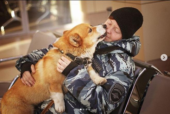 Sau 7 năm cống hiến thanh xuân cho ngành cảnh sát, cuối cùng soái cẩu nghiệp vụ Corgi duy nhất tại Nga đã nghỉ hưu khiến bao người tiếc nuối - ảnh 8