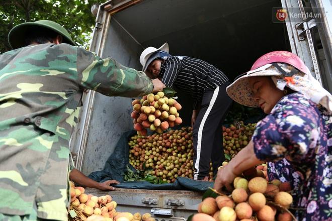 """Người dân Bắc Giang tấp nập đi bán vải thiều chín mọng: """"Chăm sóc cả năm chỉ chờ ngày này - Ảnh 11."""