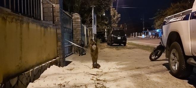 Hàng trăm chiến sỹ cùng chó nghiệp vụ xuyên đêm truy bắt tên sát nhân vượt ngục đang trốn trên đèo Hải Vân - ảnh 4