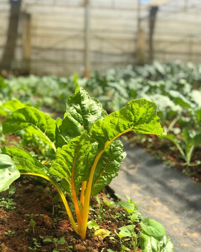 Cử nhân Luật bỏ thành phố lên Đà Lạt trồng rau, bị cha mẹ phản đối nhưng 1 năm sau nhận lại thành quả bất ngờ - ảnh 8