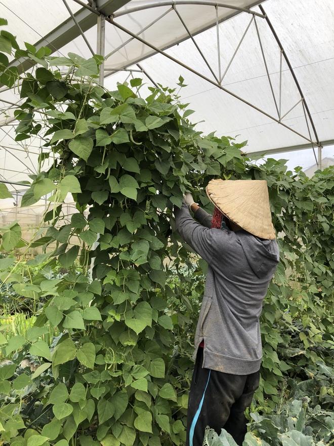 Cử nhân Luật bỏ thành phố lên Đà Lạt trồng rau, bị cha mẹ phản đối nhưng 1 năm sau nhận lại thành quả bất ngờ - ảnh 7