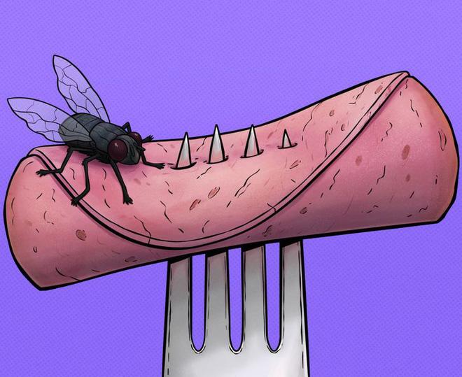 Chuyện gì thực sự xảy ra khi một con ruồi đậu lên miếng bánh của bạn? Tin tôi đi, bạn sẽ muốn vứt nó luôn đấy - ảnh 1