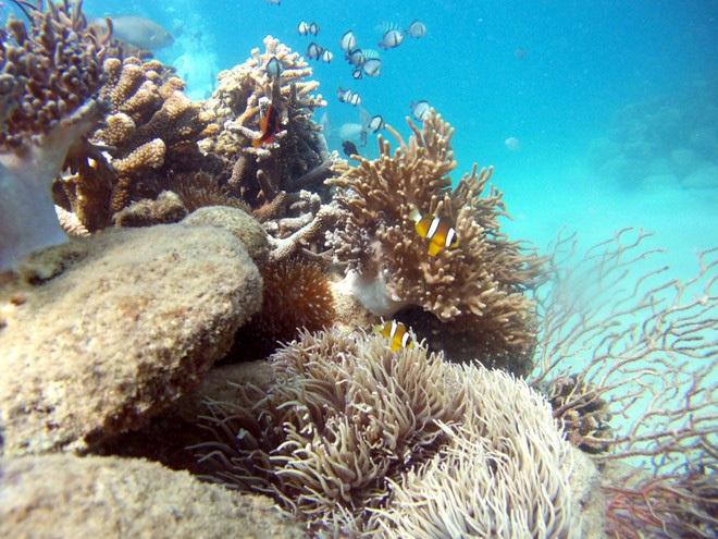 Nghe nói vịnh san hô ở Nha Trang đẹp lắm, mà nay chỉ cần chưa đến 1 triệu đồng⁄người là có thể tản bộ thảnh thơi ngắm đáy đại dương kỳ bí rồi - Ảnh 3.