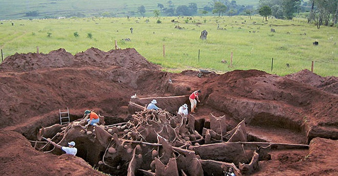 Đổ 10 tấn xi măng xuống tổ kiến dưới lòng đất, nhà khoa học không thể tin vào mắt mình khi khám phá ra thành phố khổng lồ - ảnh 2