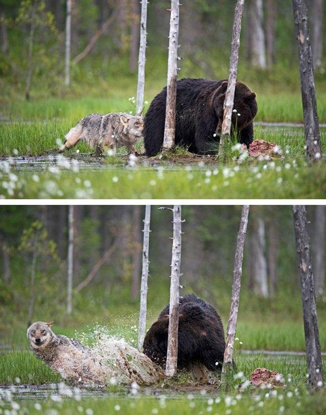 Chuyện tình vụng trộm của nàng sói xám và chàng gấu nâu: Quấn quýt từ 8 giờ tối tới 4 giờ sáng mỗi ngày rồi ai về nhà nấy - ảnh 1