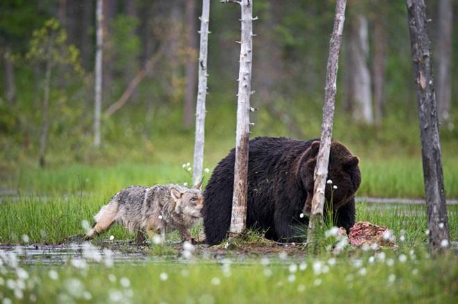 Chuyện tình vụng trộm của nàng sói xám và chàng gấu nâu: Quấn quýt từ 8 giờ tối tới 4 giờ sáng mỗi ngày rồi ai về nhà nấy - ảnh 9