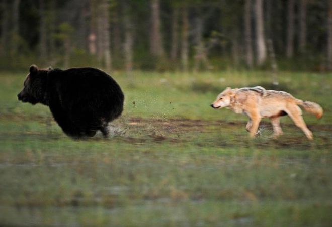 Chuyện tình vụng trộm của nàng sói xám và chàng gấu nâu: Quấn quýt từ 8 giờ tối tới 4 giờ sáng mỗi ngày rồi ai về nhà nấy - ảnh 2