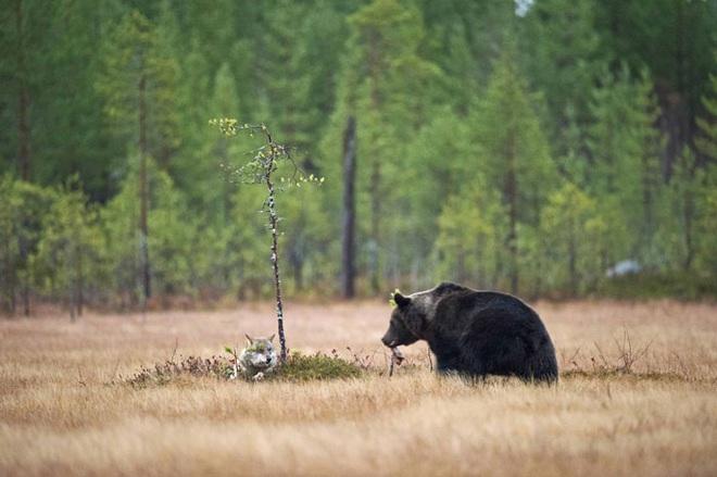 Chuyện tình vụng trộm của nàng sói xám và chàng gấu nâu: Quấn quýt từ 8 giờ tối tới 4 giờ sáng mỗi ngày rồi ai về nhà nấy - ảnh 3