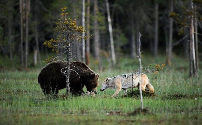 Chuyện tình vụng trộm của nàng sói xám và chàng gấu nâu: Quấn quýt từ 8 giờ tối tới 4 giờ sáng mỗi ngày rồi ai về nhà nấy - ảnh 4