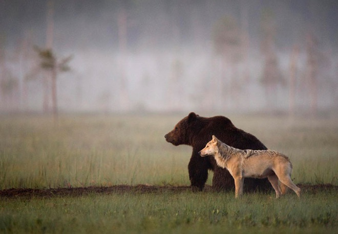 Chuyện tình vụng trộm của nàng sói xám và chàng gấu nâu: Quấn quýt từ 8 giờ tối tới 4 giờ sáng mỗi ngày rồi ai về nhà nấy - ảnh 10