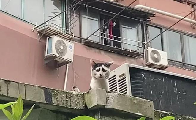 Chú mèo hoang sở hữu khuôn mặt buồn tới thiên thu gây bão MXH Trung Quốc - Ảnh 2.