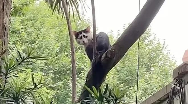 Chú mèo hoang sở hữu khuôn mặt buồn tới thiên thu gây bão MXH Trung Quốc - Ảnh 4.