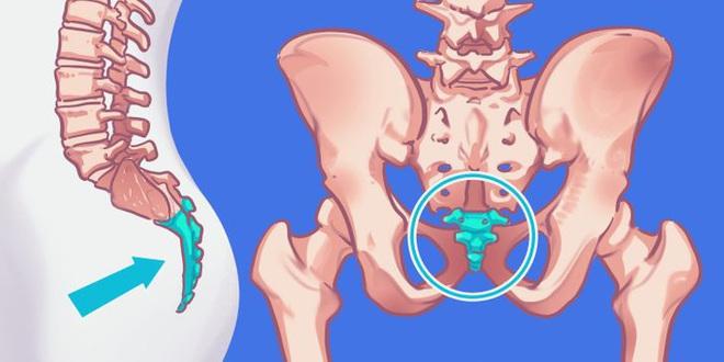 9 bộ phận vô dụng đến thảm thương trên cơ thể chúng ta, nhưng lại là bảo chứng sinh tồn của quá trình tiến hóa - ảnh 3