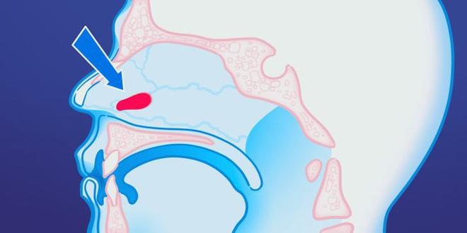 9 bộ phận vô dụng đến thảm thương trên cơ thể chúng ta, nhưng lại là bảo chứng sinh tồn của quá trình tiến hóa - ảnh 4