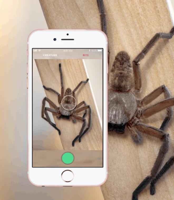 Pokemon GO phiên bản Úc: App giúp người dân nhận diện rắn, rết, nhện độc để tránh... mất mạng - Ảnh 1.