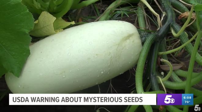 """Chưa kịp cảnh báo, nông dân Mỹ đã trồng thử hạt giống bí ẩn từ Trung Quốc và kết quả chúng mọc... """"như điên"""" - Ảnh 3."""