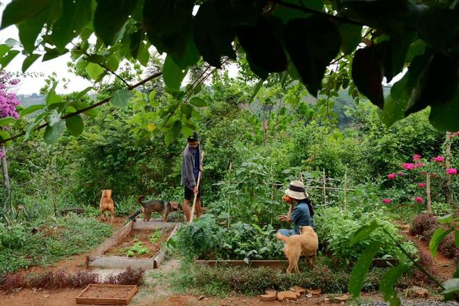 Những mẩu chuyện chưa kể của đôi vợ chồng trẻ bỏ phố về rừng: Không phải ai sinh ra cũng để trồng rau, nuôi cá - ảnh 10