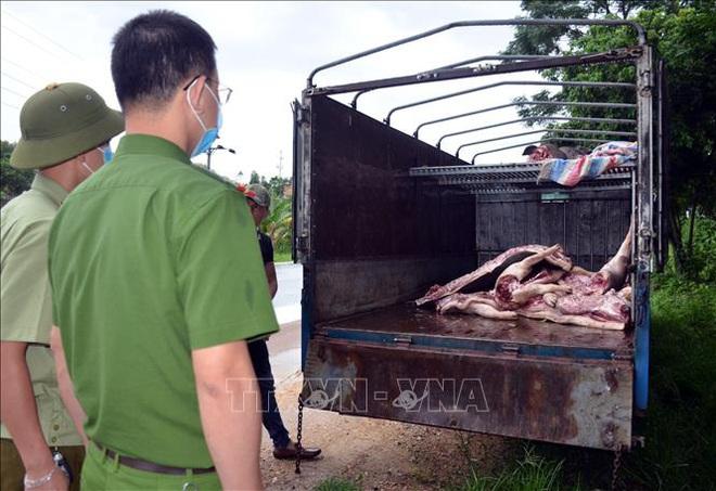 Phát hiện vụ vận chuyển gần 1 tấn lợn và thịt lợn mắc dịch tả lợn châu Phi - ảnh 1