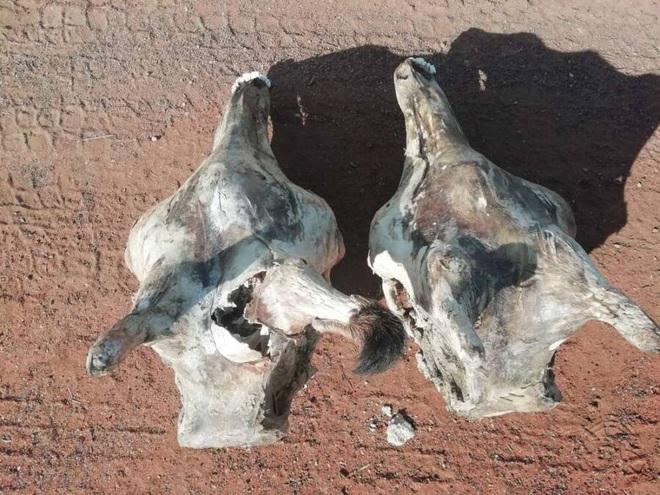 Nghiên cứu mới: Hươu cao cổ thường xuyên bị Thiên Lôi đánh lén do quá cao kều - ảnh 1