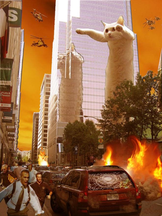 Nobiko - chú mèo huyền thoại Internet với bức ảnh meme Con mèo dài ngoằng qua đời ở tuổi 18 - ảnh 4
