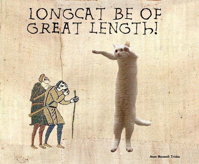 Nobiko - chú mèo huyền thoại Internet với bức ảnh meme Con mèo dài ngoằng qua đời ở tuổi 18 - ảnh 5