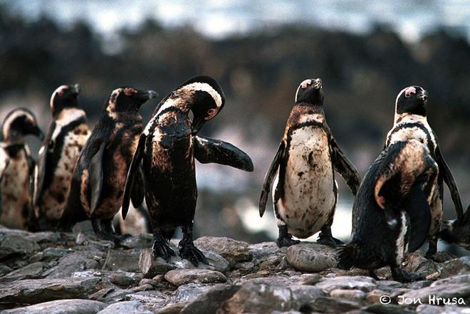 Loạt ảnh khiến bất kỳ ai nhìn thấy cũng ám ảnh về sức ảnh hưởng kinh hoàng của ô nhiễm môi trường đối với các loài động vật - ảnh 14
