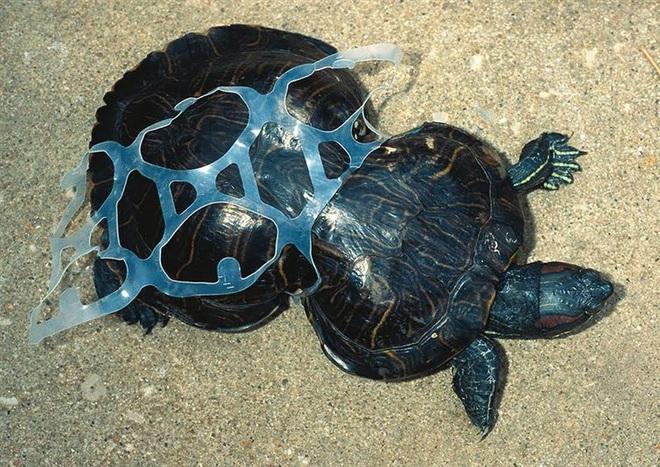 Loạt ảnh khiến bất kỳ ai nhìn thấy cũng ám ảnh về sức ảnh hưởng kinh hoàng của ô nhiễm môi trường đối với các loài động vật - ảnh 7