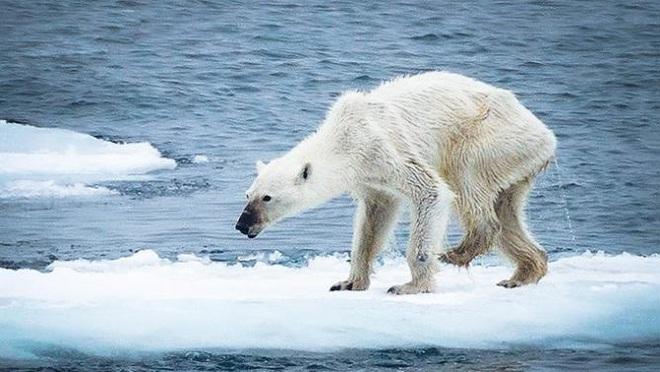 Loạt ảnh khiến bất kỳ ai nhìn thấy cũng ám ảnh về sức ảnh hưởng kinh hoàng của ô nhiễm môi trường đối với các loài động vật - ảnh 9