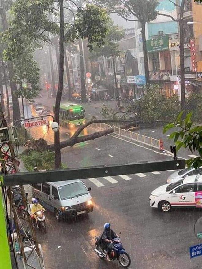 Nạn nhân bị cây xanh bật gốc đè trúng trong mưa lớn ở Sài Gòn chấn thương nặng, đã phẫu thuật gấp - ảnh 2