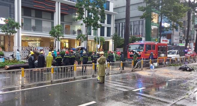 Hé lộ nguyên nhân cây xanh bật gốc, đè chết người đi đường ở Sài Gòn - ảnh 1
