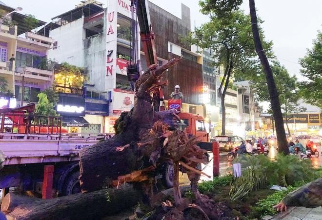 Gia cảnh đáng thương của nạn nhân bị cây xanh đè tử vong ở Sài Gòn: 2 vợ chồng cùng thất nghiệp do Covid-19, đứa con đầu chưa đầy 4 tuổi - ảnh 5