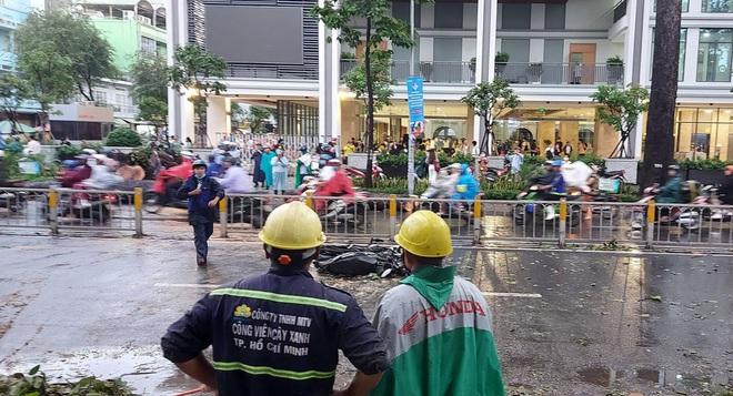 Hé lộ nguyên nhân cây xanh bật gốc, đè chết người đi đường ở Sài Gòn - ảnh 2