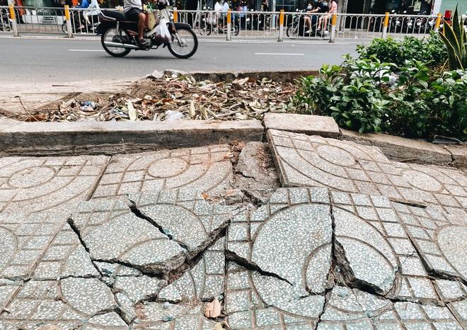 Sau vụ cây xanh bật gốc đè chết người: Vẫn còn nhiều cây đã già cỗi có rễ lộ thiên, nhánh vươn ra mặt đường ở Sài Gòn - ảnh 3