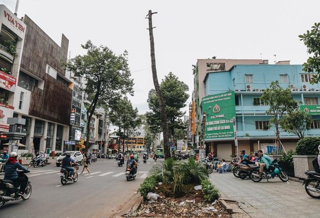 Sau vụ cây xanh bật gốc đè chết người: Vẫn còn nhiều cây đã già cỗi có rễ lộ thiên, nhánh vươn ra mặt đường ở Sài Gòn - ảnh 4