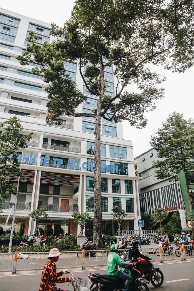 Sau vụ cây xanh bật gốc đè chết người: Vẫn còn nhiều cây đã già cỗi có rễ lộ thiên, nhánh vươn ra mặt đường ở Sài Gòn - ảnh 5