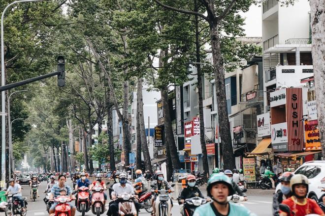 Sau vụ cây xanh bật gốc đè chết người: Vẫn còn nhiều cây đã già cỗi có rễ lộ thiên, nhánh vươn ra mặt đường ở Sài Gòn - ảnh 7