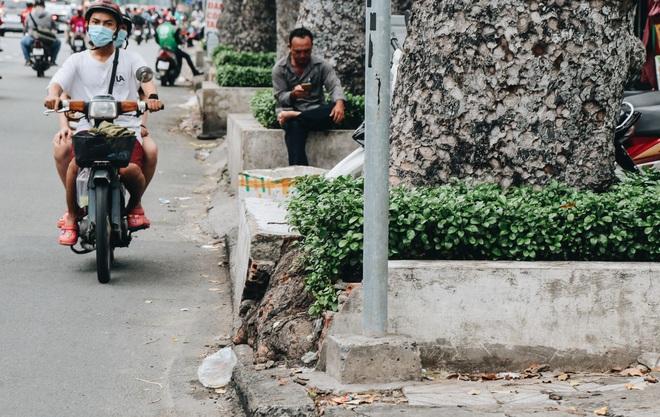 Sau vụ cây xanh bật gốc đè chết người: Vẫn còn nhiều cây đã già cỗi có rễ lộ thiên, nhánh vươn ra mặt đường ở Sài Gòn - ảnh 15